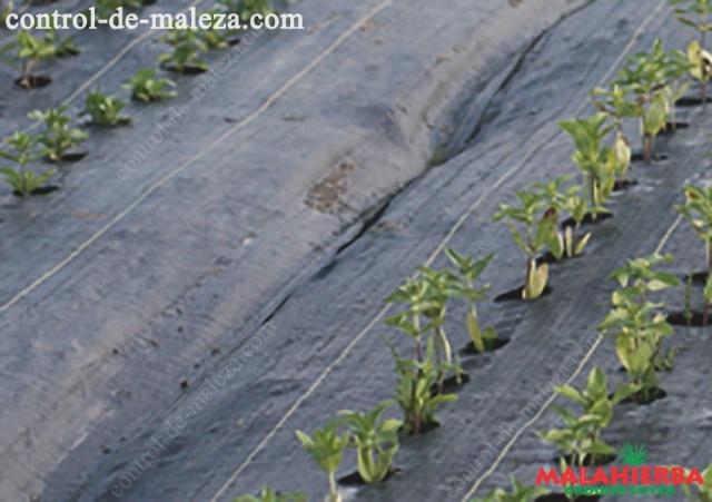 Ahorra tiempo y dinero de mano de obra empleado para aplicar agroquímicos o eliminar maleza.