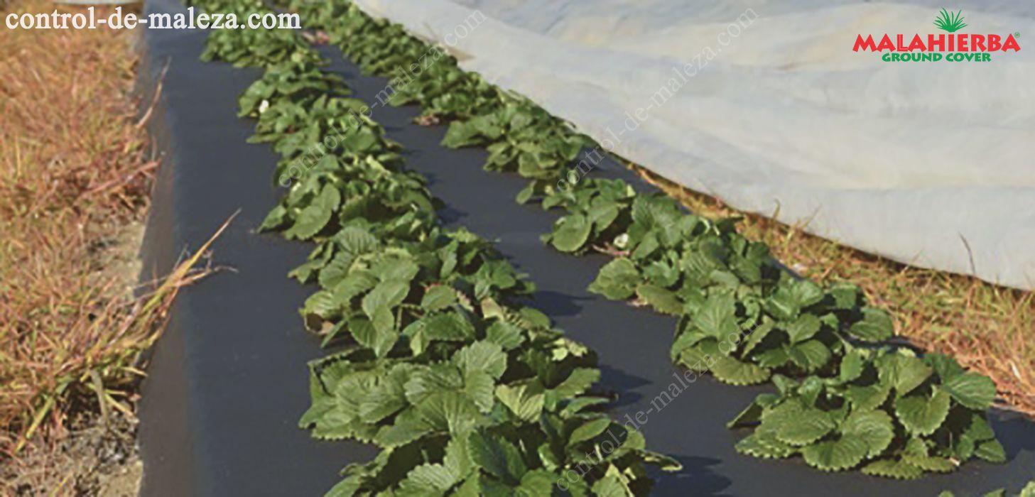malla anit maleza en cultivos de hortalizas