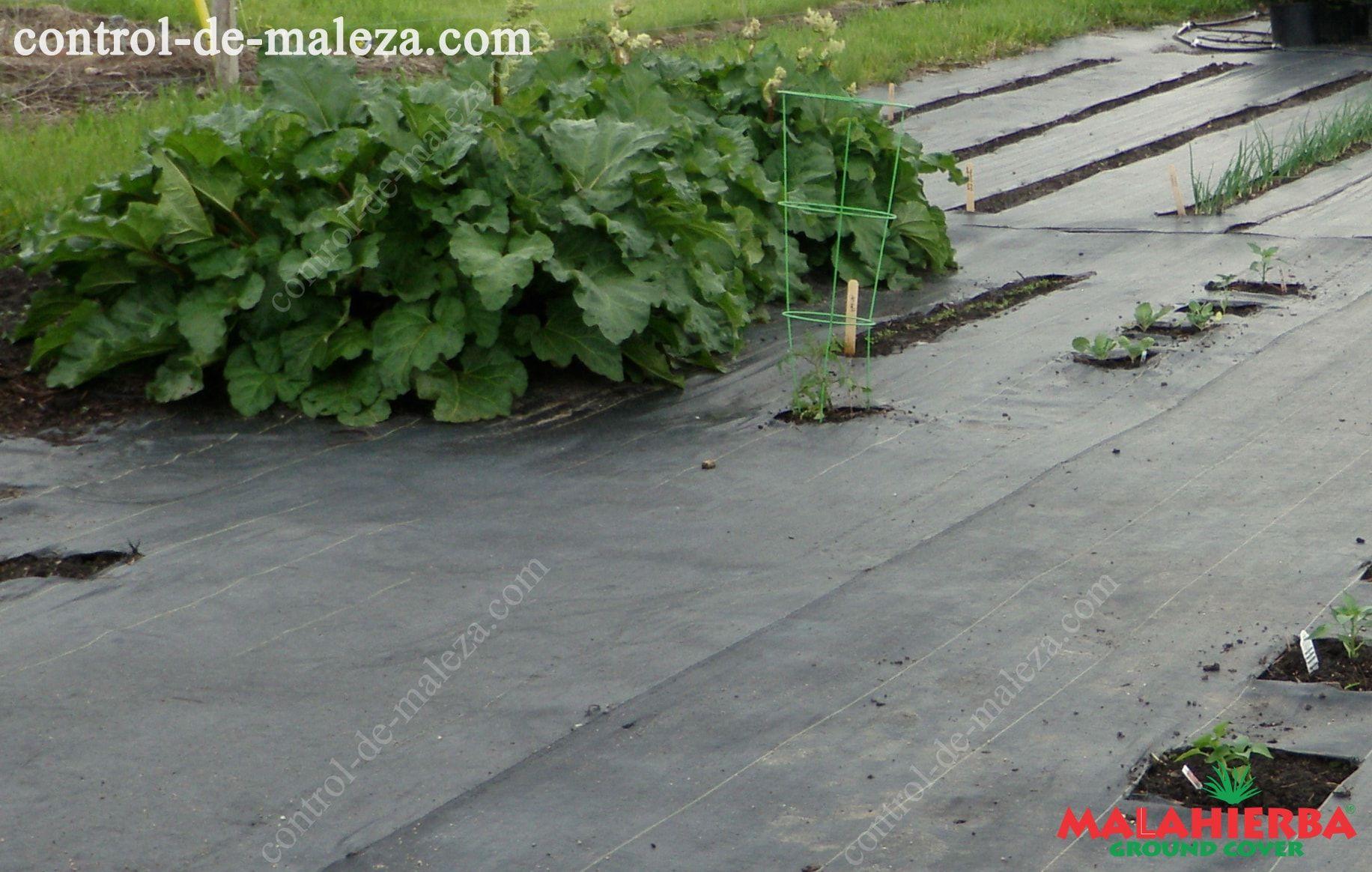 Tela ground cover para cultivos