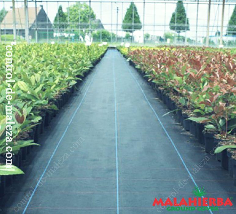 Uso de malla anti-maleza groundcover en Floricultura.
