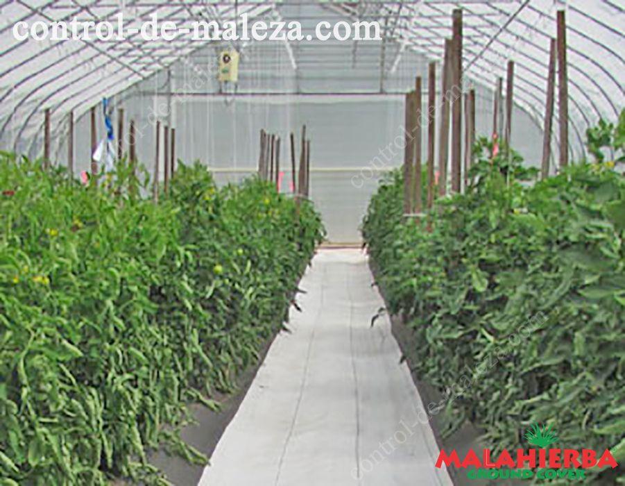 Proteccion de cultivos de mala hierbas
